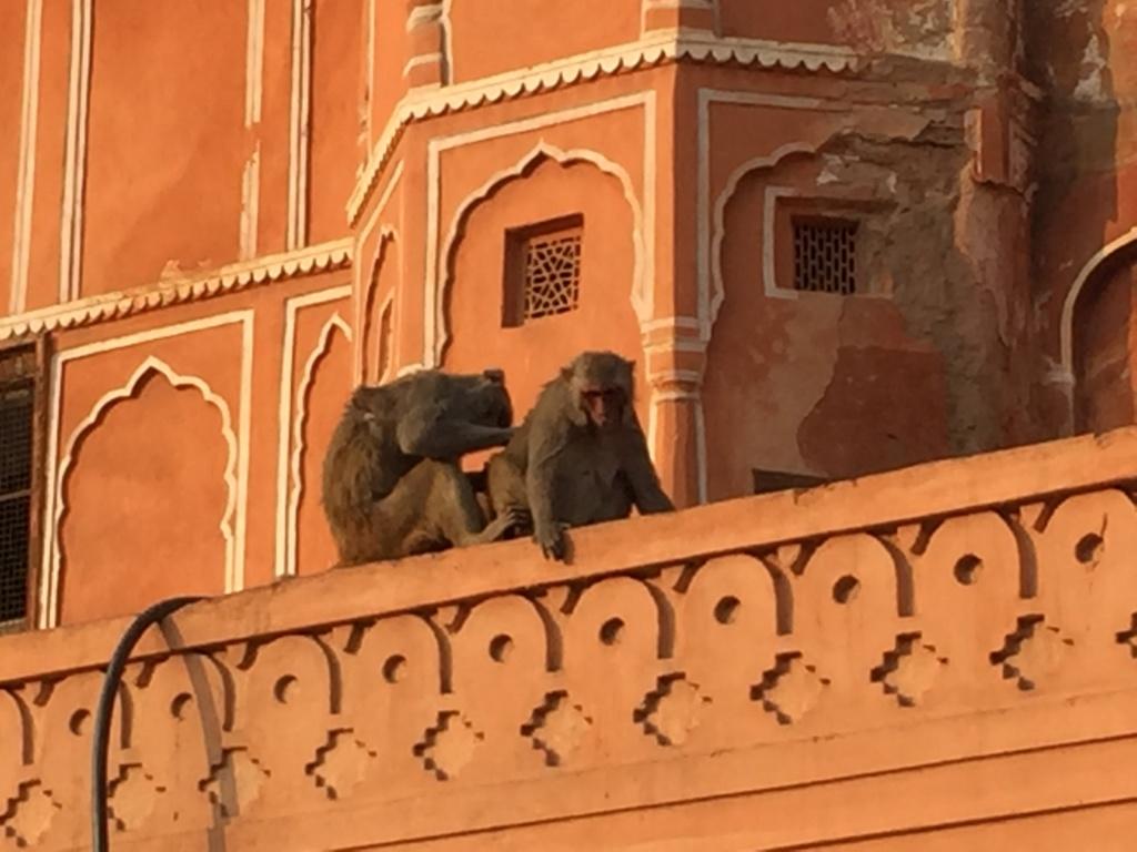 qué ver en jaipur, fachadas tomadas por los monos